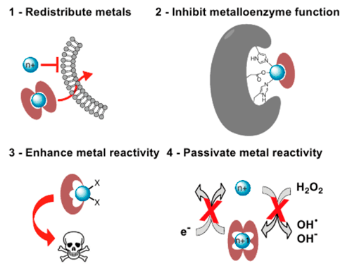 Various approaches that use principles of metal chelation. Picture adapted from Franz, K. J. et al., 2013